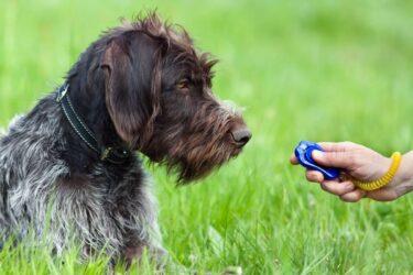 ¿Para qué sirve el clicker para perros en el adiestramiento canino?